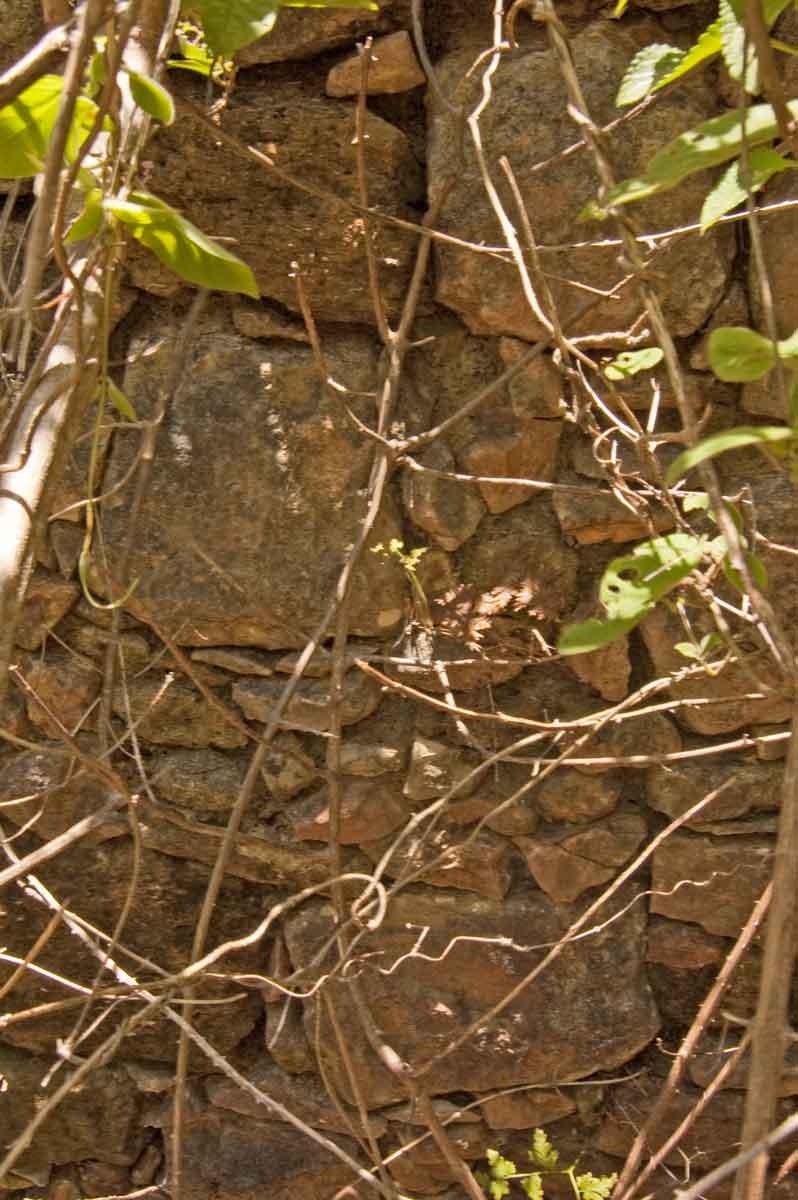 Restes de murs